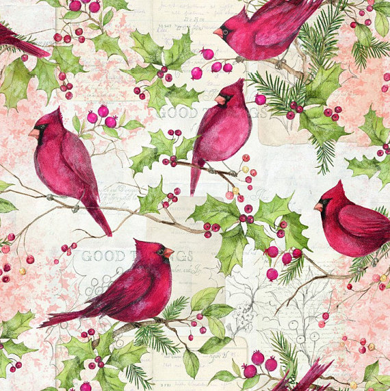 Christmas Cardinals Images.Christmas Cardinals And Holly By Springs Creative